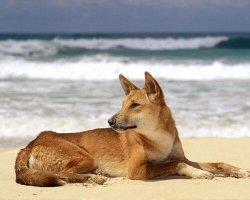 location-coolum-beach-accommodation-1200-9